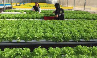 Bí quyết làm giàu - Vườn rau hữu cơ cho thu nhập 350 triệu/tháng của đạo diễn trẻ