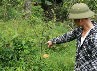 Clip: Người dân Nghệ An đổ xô đi săn rắn lục đuôi đỏ