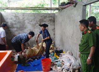 Thị trường - Hơn 1000 kg thịt dê thối, không nguồn gốc suýt vào nhà hàng