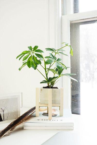 Những chậu cây xanh đẹp tuyệt giúp nhà bạn đầy sức sống - ảnh 1