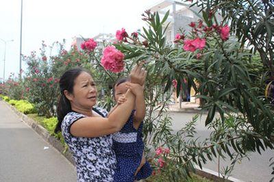 Nhà trồng cây cảnh: Cẩn trọng với những cây đẹp nhưng độc khiến cả nhà hôn mê - ảnh 1
