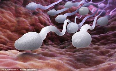 """Mách nhỏ quý ông: Khẩu phần thiếu protein có thể khiến """"tinh binh"""" ốm yếu - ảnh 1"""
