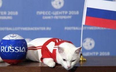 World Cup 2018: Mèo tiên tri Achilles dự đoán Nga thắng trận khai mạc - ảnh 1