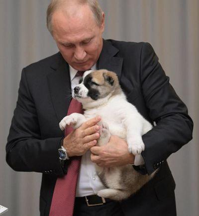 Tổng thống Putin lại được tặng chó nhân dịp sinh nhật - ảnh 1