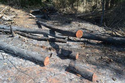 10 héc ta rừng cách chốt bảo vệ 1km bỗng nhiên bị phá  trắng - ảnh 1