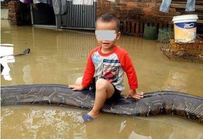 """Tin tức mới nhất vụ bé trai 3 tuổi cưỡi trăn """"khủng"""" ở Việt Nam - ảnh 1"""