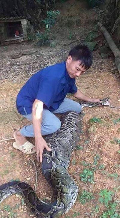 """Người dân Lạng Sơn bắt được con trăn """"khủng"""" dài 3m nuốt dê 15kg - ảnh 1"""