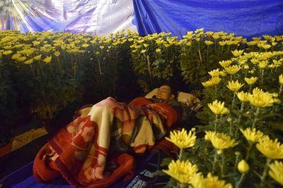 Phóng sự ảnh: Cảnh màn trời chiếu đất trong giá lạnh của người bán hoa tết ở Đà Nẵng - ảnh 1