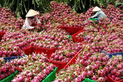Cảnh báo việc thương lái Trung Quốc lùng mua nông sản Việt - ảnh 1