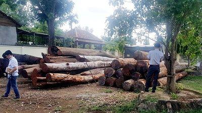 """Đắk Nông: 9 cán bộ kiểm lâm bị kỷ luật vì liên quan đến trùm gỗ lậu Phượng """"râu"""" - ảnh 1"""
