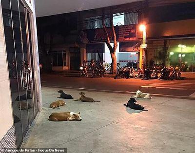 Bầy chó hốt hoảng chạy theo xe cứu thương chở ông chủ bị đột quỵ tới bệnh viện - ảnh 1
