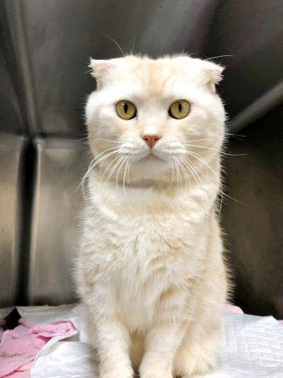 Cố tình bỏ rơi một con mèo, người đàn ông bị phạt hơn 45 triệu đồng  - ảnh 1