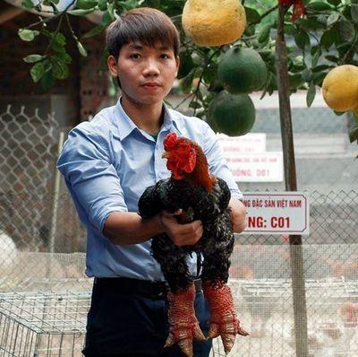 6 năm du học nước ngoài, chàng trai trẻ khởi nghiệp với trại gà thu 1,7 tỷ đồng/năm - ảnh 1