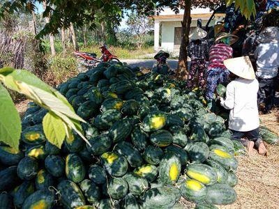 """Từ đầu năm 2018, có bao nhiêu nông sản Việt phải """"xếp hàng"""" chờ giải cứu? - ảnh 1"""