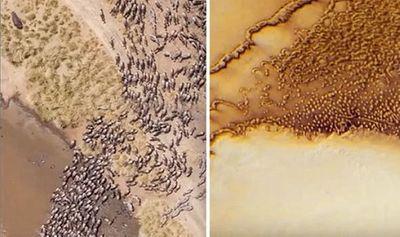 Những đàn động vật ngoài hành tinh khổng lồ xuất hiện trong hình ảnh thăm dò của NASA? - ảnh 1