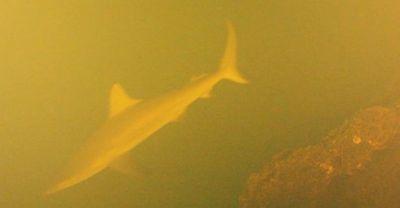 Kỳ lạ những chú cá mập sống bên trong miệng núi lửa  - ảnh 1
