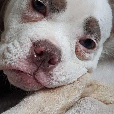 """Chú chó với gương mặt luôn buồn rầu """"đánh lừa cả thế giới"""" - ảnh 1"""