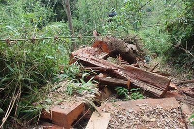 Quảng Nam: Xử lý kỷ luật, cách chức hàng loạt cán bộ kiểm lâm để mất rừng - ảnh 1