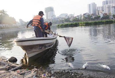 200kg cá chết bất thường ở Hồ Hoàng Cầu - ảnh 1