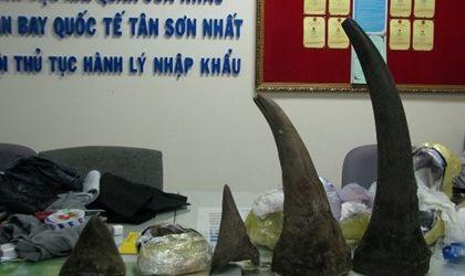 An ninh - Hình sự - Bắt 6kg sừng tê giác nhập lậu trị giá 4 tỷ đồng ở sân bay Nội Bài