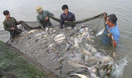 Thị trường - Vụ cấp khống 800 sản phẩm nuôi trồng thủy sản: Vì sao chưa công bố danh sách?
