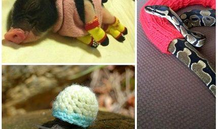 Ăn - Chơi - Ngộ nghĩnh bộ sưu tập áo ấm của... động vật