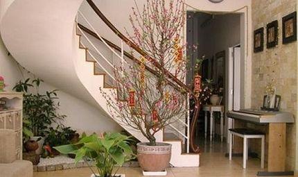 Nhà đẹp - Cách chọn và giữ hoa đào đẹp ngày Tết đón tài lộc vào nhà