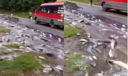 Tin tức - Video: Xe tải lật giữa đường, hàng tấn cá chảy như suối trên quốc lộ