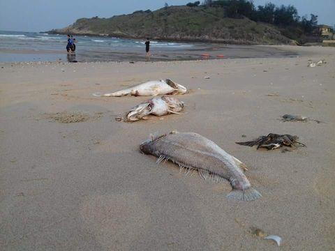 """Nghi vấn """"động trời"""" về vụ cá chết hàng loạt ở bờ biển Bình – Trị - Thiên  - Ảnh 1"""