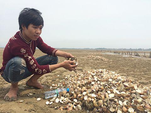 Hơn 60 tấn ngao chết trắng đầm ở Hà Tĩnh - Ảnh 1