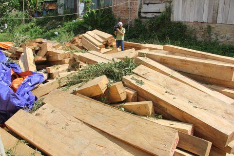 Vụ phá rừng pơ mu ở Quảng Nam: Đình chỉ công tác 3 cán bộ biên phòng - Ảnh 1