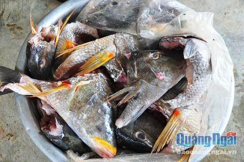 Quảng Ngãi: 28 người nhập viện nghi do ngộ độc cá hồng - Ảnh 2
