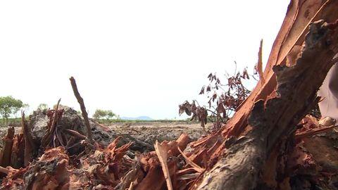 Rừng ngập mặn bị xâm hại nghiêm trọng, người dân nơm nớp mùa mưa lũ - Ảnh 3