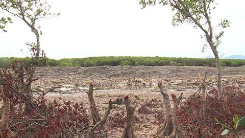 Rừng ngập mặn bị xâm hại nghiêm trọng, người dân nơm nớp mùa mưa lũ - Ảnh 2