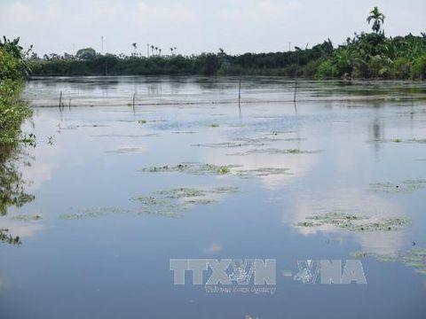 Không có hiện tượng cá chết trắng sông Ấu - Ảnh 3