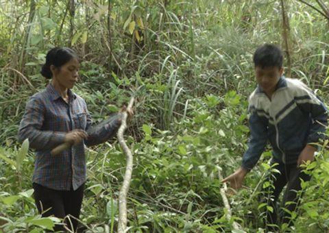 Sống đẹp - Niềm vui của hai mẹ con nghèo ở xã Cốc Đán khi nhận bò của Lục lạc vàng
