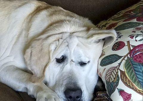 """Tin tức - Chú chó bị bỏ rơi vì """"xấu ma chê quỷ hờn"""" hồi sinh sau khi được nhận nuôi"""