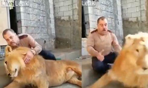 Video: Vô tình đập vào đầu sư tử, người đàn ông suýt mất mạng