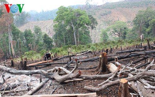 Bắt tạm giam giám đốc xí nghiệp lâm nghiệp để mất rừng - Ảnh 1