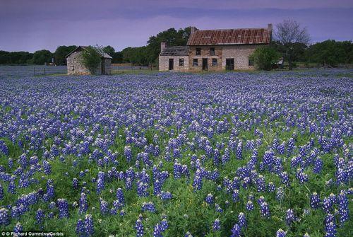 Chiêm ngưỡng 10 vườn hoa đẹp nhất thế giới  - Ảnh 11
