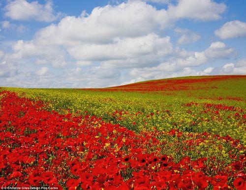 Chiêm ngưỡng 10 vườn hoa đẹp nhất thế giới  - Ảnh 8