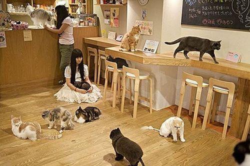 10 nhà hàng lạ lùng nhất thế giới - Ảnh 17