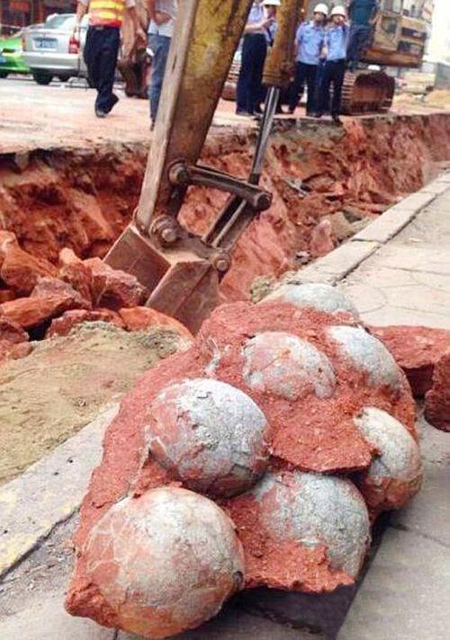 Bất ngờ đào được 43 quả trứng khủng long hóa thạch khi đào đường - Ảnh 1