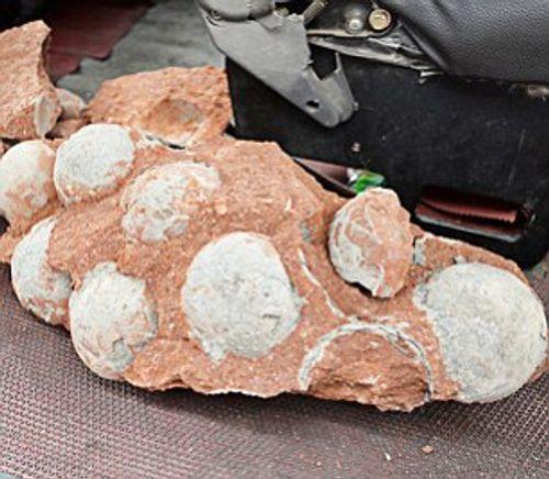 Bất ngờ đào được 43 quả trứng khủng long hóa thạch khi đào đường - Ảnh 4