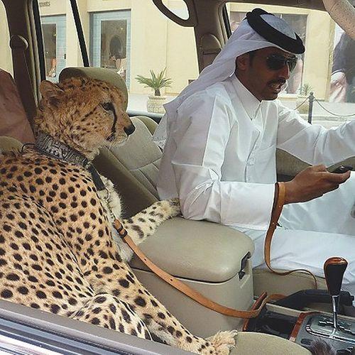 """Những hình ảnh """"điên rồ"""" về sự giàu có kinh khủng ở Dubai gây choáng - Ảnh 1"""
