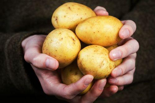 Tuyệt đối không nên bảo quản khoai tây trong tủ lạnh - Ảnh 1