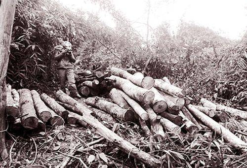 Rừng bị chặt phá, các ngành chức năng vẫn không hay biết  - Ảnh 1