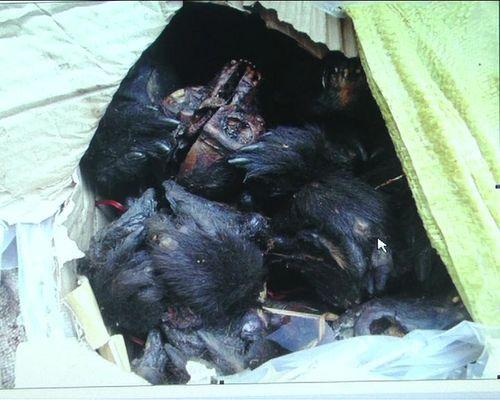 Bắt giữ vụ vận chuyển 16 bộ xương động vật hoang dã - Ảnh 1