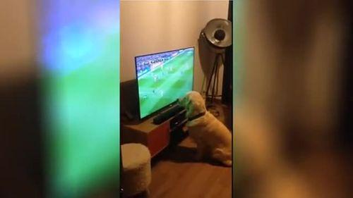 Chó chăm chú xem EURO và ăn mừng bàn thắng như người - Ảnh 1