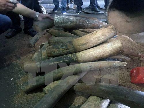 Phát hiện vụ vận chuyển ngà voi từ Hà Nội đi Thái Lan bằng máy bay - Ảnh 1